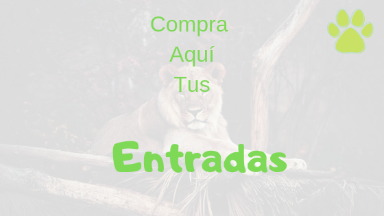 Comprar entradas Zoo Aquarium de Madrid